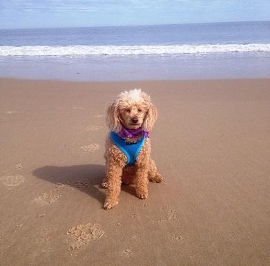 Why We Live Here . . . Dog-Friendly Beaches