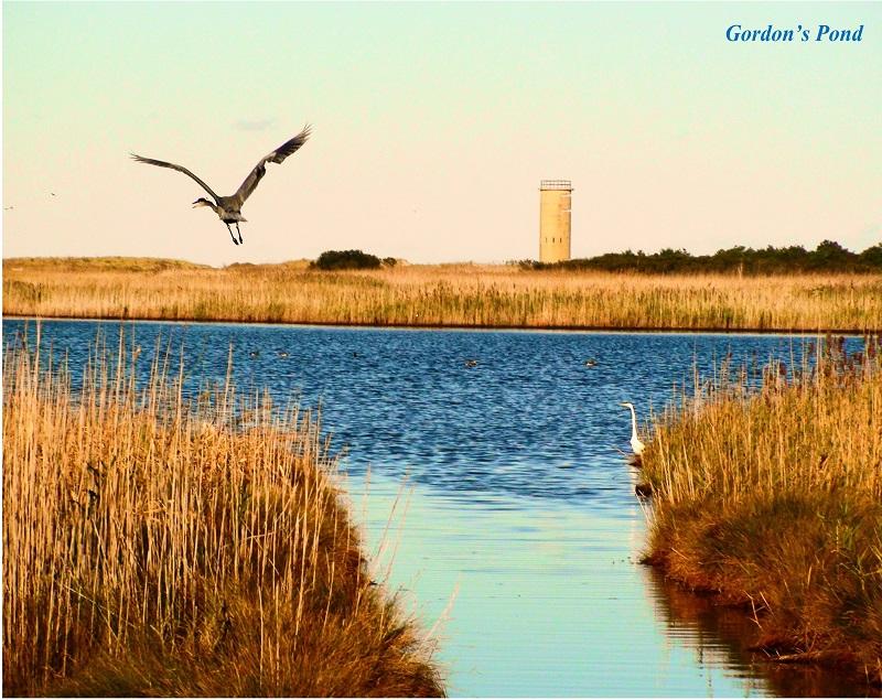 Coastal Delaware Trails